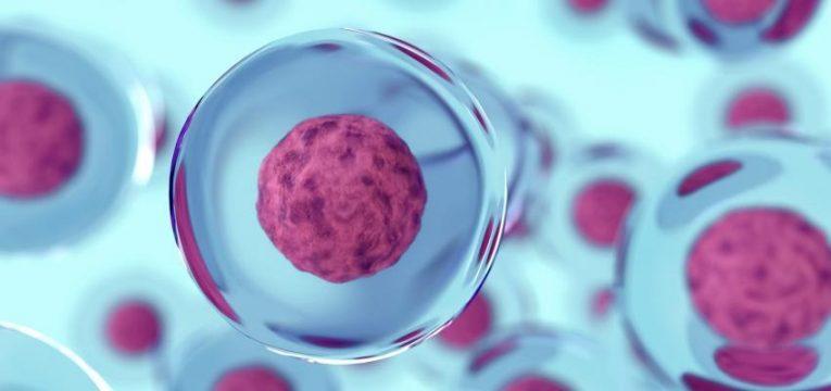 Células madre de la sangre del cordón umbilical: criopreservación 2