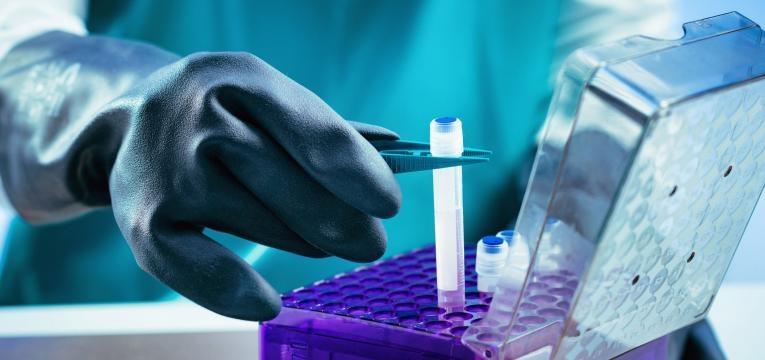 celulas estaminais criopreservacao