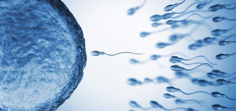 ¿Sabe cuántos días después de la ovulación ocurre la fecundación? 1