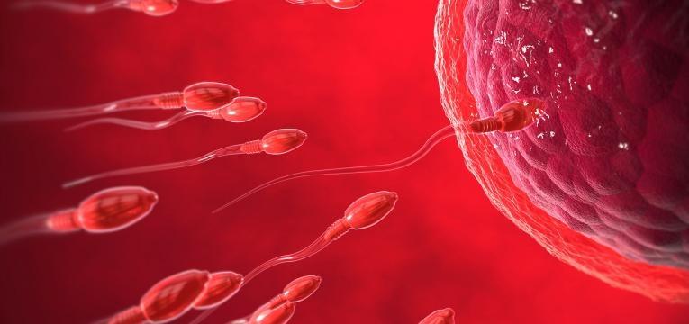 ¿Sabe cuántos días después de la ovulación ocurre la fecundación? 3